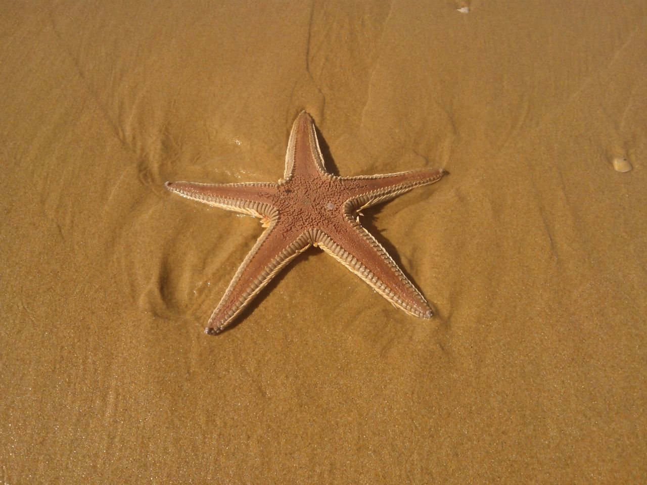 Beautiful stock photos of starfish, Animal Themes, Animals In The Wild, Beach, Beauty In Nature