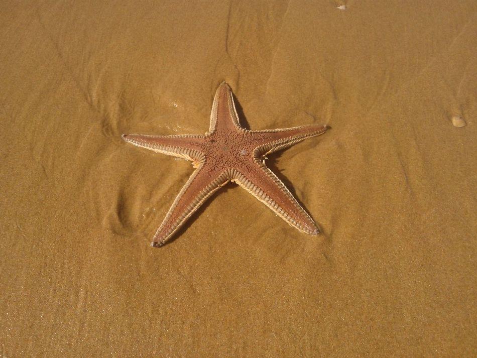 Beautiful stock photos of starfish, Animal Themes, Animals In The Wild, Beach, Beauty In Nature