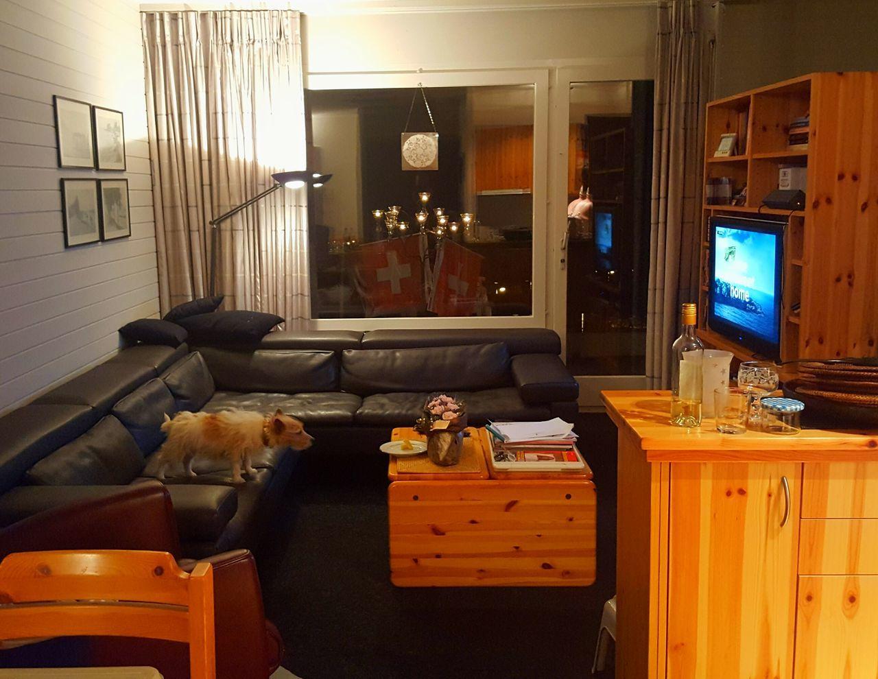 Dog Home Showcase Interior