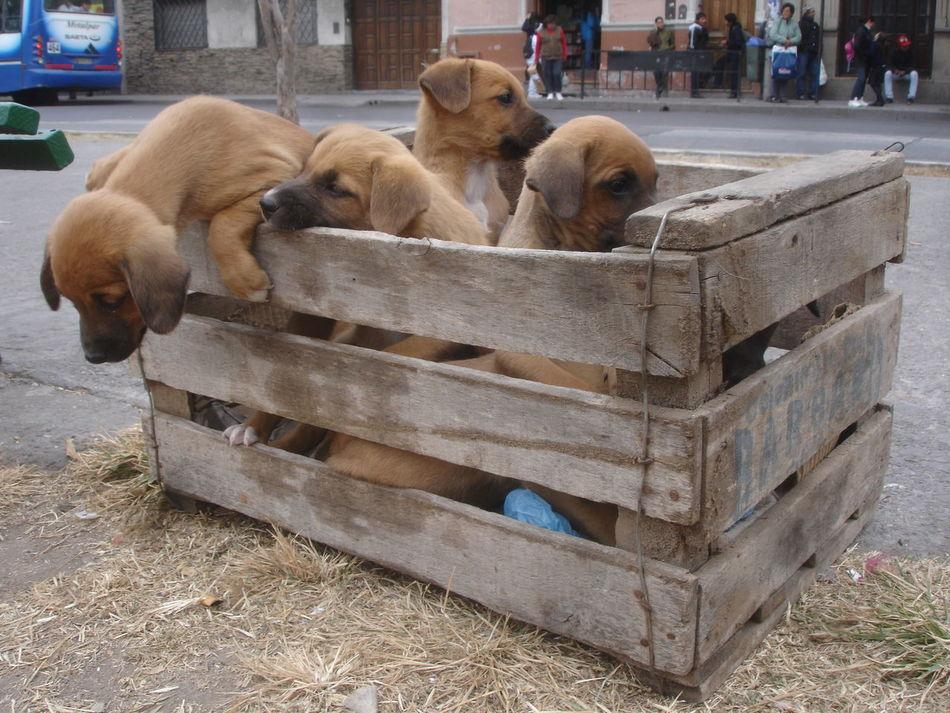 Beautiful stock photos of box, Animal, Animal Themes, Box, Dog