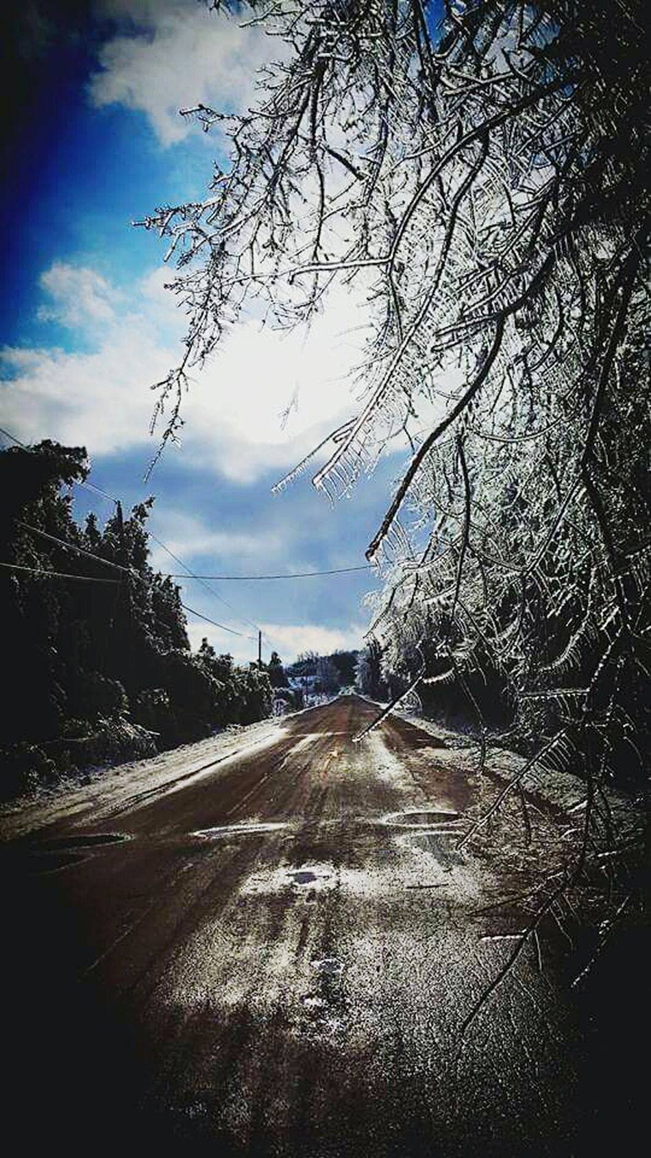 EyeEmNewHere Country Girl Eye For Photography Roadside Canadianwinter Ice Storm Icicles Dirtroads Viasindios Tree Beauty In Nature