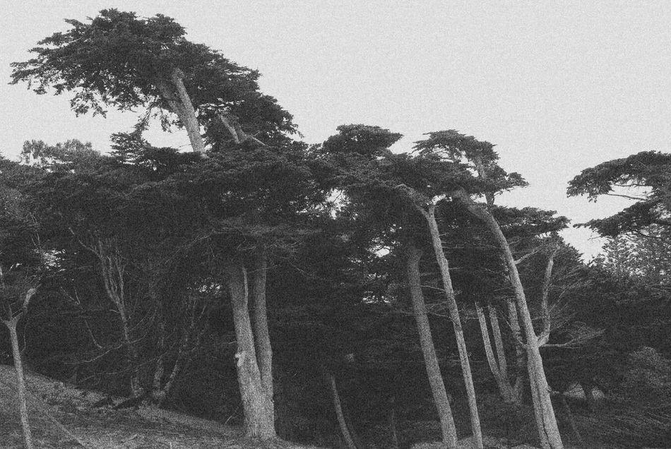throwback to San Francisco 🍃 Sanfrancisco Roadtrip USA Trees Summer Shadows Blackandwhite B&w