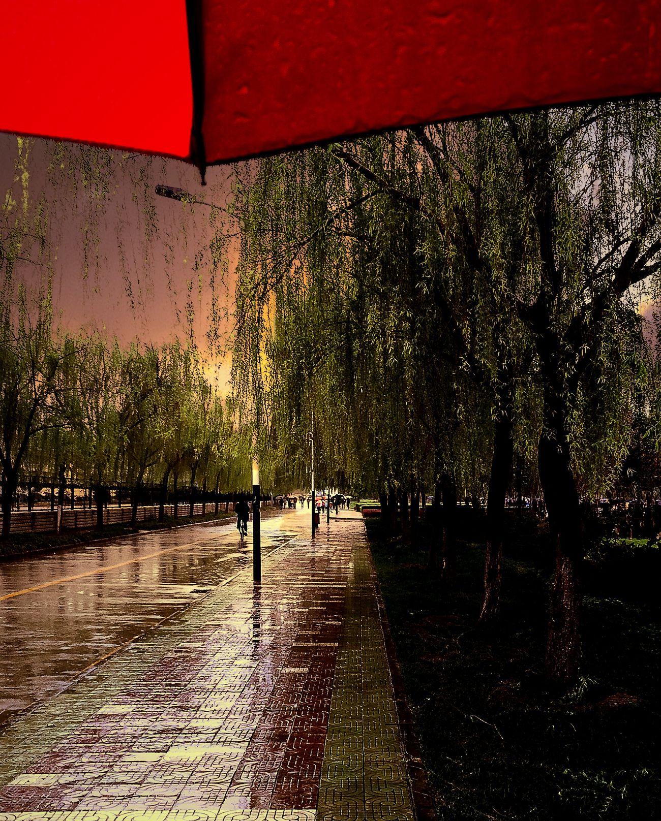 雨 Light
