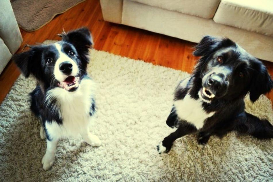Canine Love :)