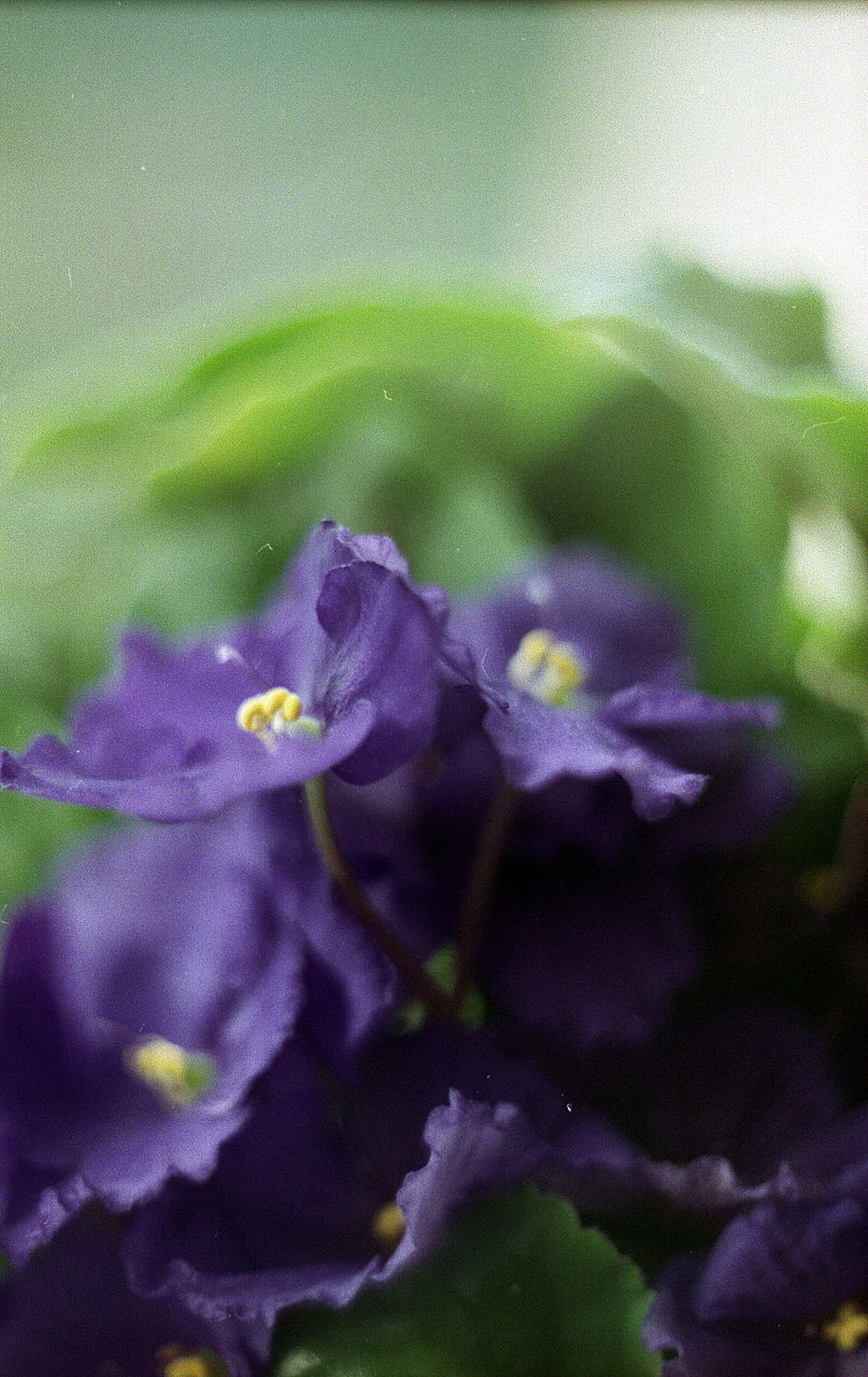 flower, nature, purple, growth, beauty in nature, petal, no people, water, plant, fragility, freshness, outdoors, blooming, close-up, flower head, day