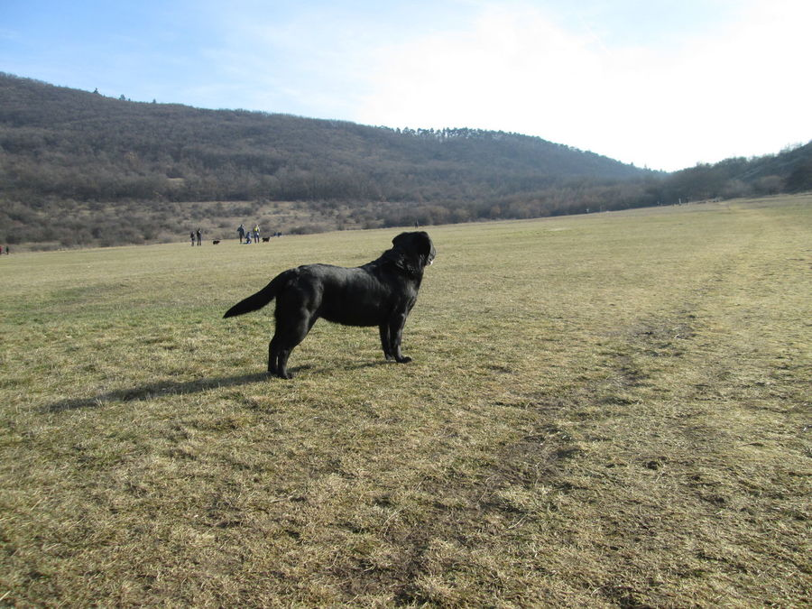 Animal Themes Beauty In Nature Cloud Cloud - Sky Day Dog Dog Perspective Dogwalk Domestic Animals Field Grass Grassy Landscape Mammal Mountain Nature No People Non Urban Scene Outdoors Remote Sky Tranquil Scene Tranquility