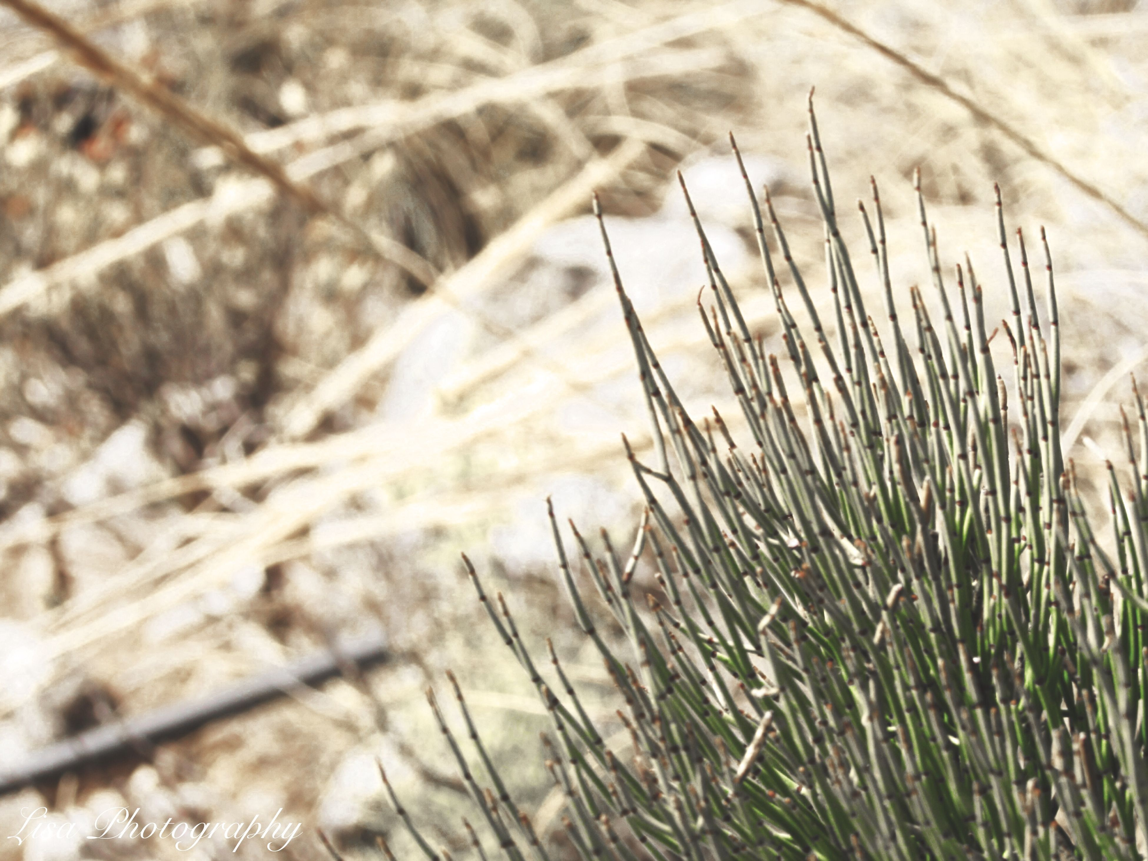 growth, plant, grass, focus on foreground, close-up, field, nature, selective focus, tranquility, growing, dry, day, outdoors, no people, beauty in nature, stem, sunlight, twig, fragility, green color
