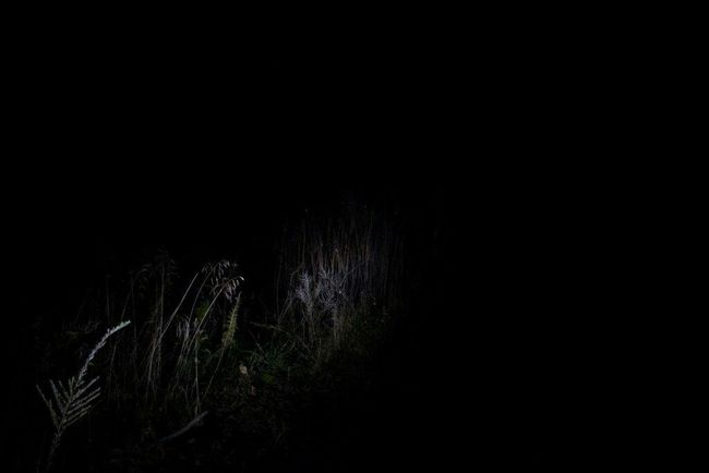 Showcase: December Darkness Littlelight Nature Woods Forest Night Flashlight Creepy