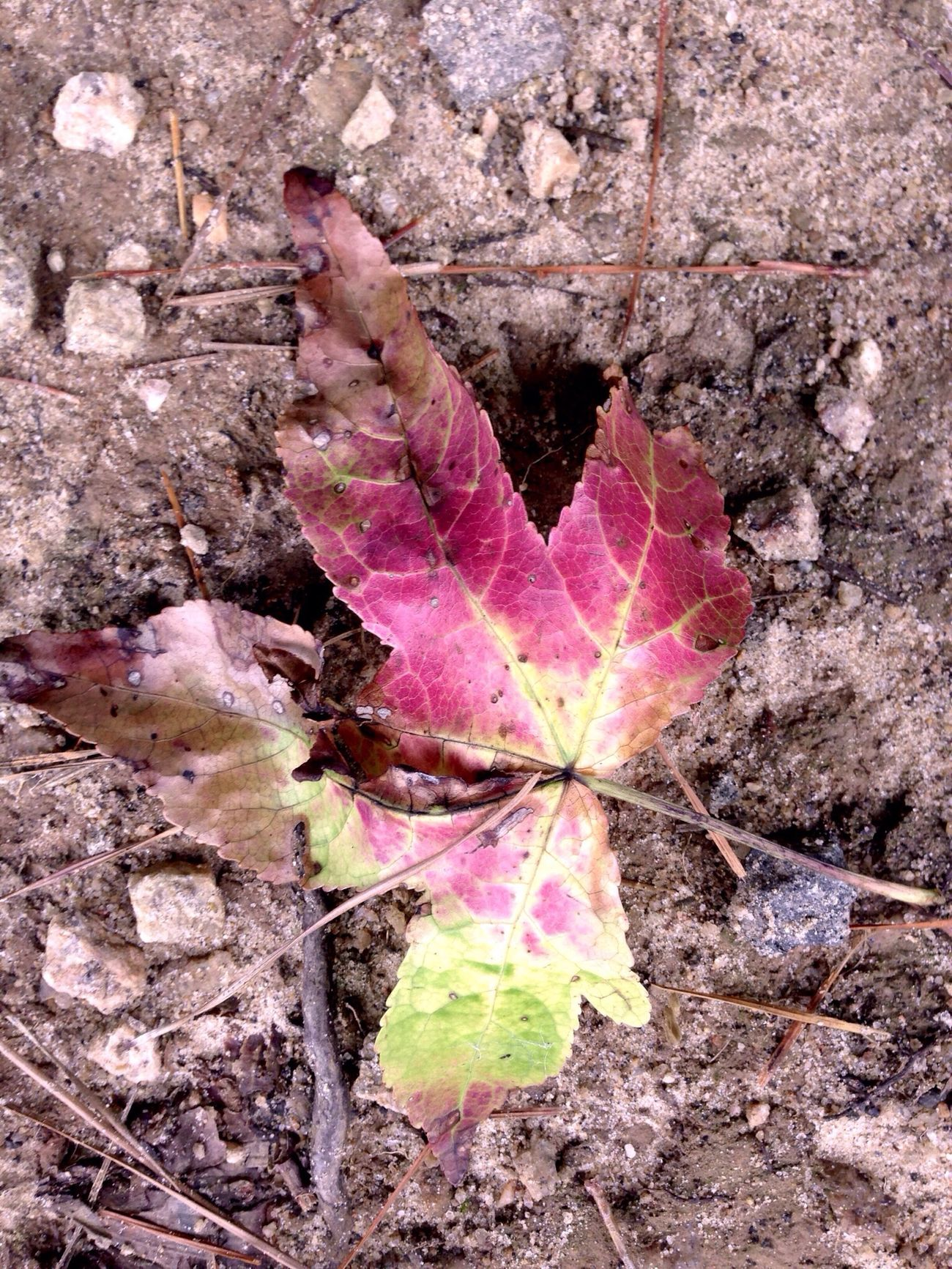 fall now Nem Trees