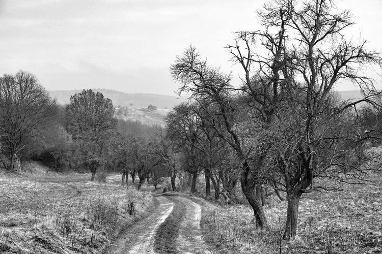 Wettelrode haben wir hinter uns gelassen. An diesem winterkalten Sonntag streben wir nach Grillenberg, um den Stempel 208 der Harzer Wandernadel zu erwerben. noch 3 Kilometer, dann sind wir auf der Grillenburg. Winter Trees Winter Wege Schwarzweiß Blackandwhite Tree Outdoors Day Nature No People Landscape Sky