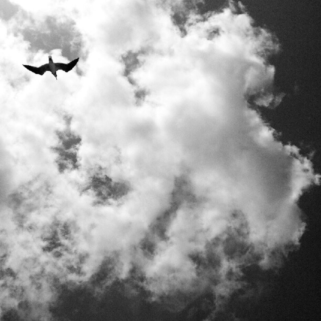 Fly away Lookingup Blackandwhite Bnw Fortheloveofblackandwhite Monochrome Black&white LiveanddirectfromLosAngeles Sky Skyporn Birds Clouds Clouds And Sky
