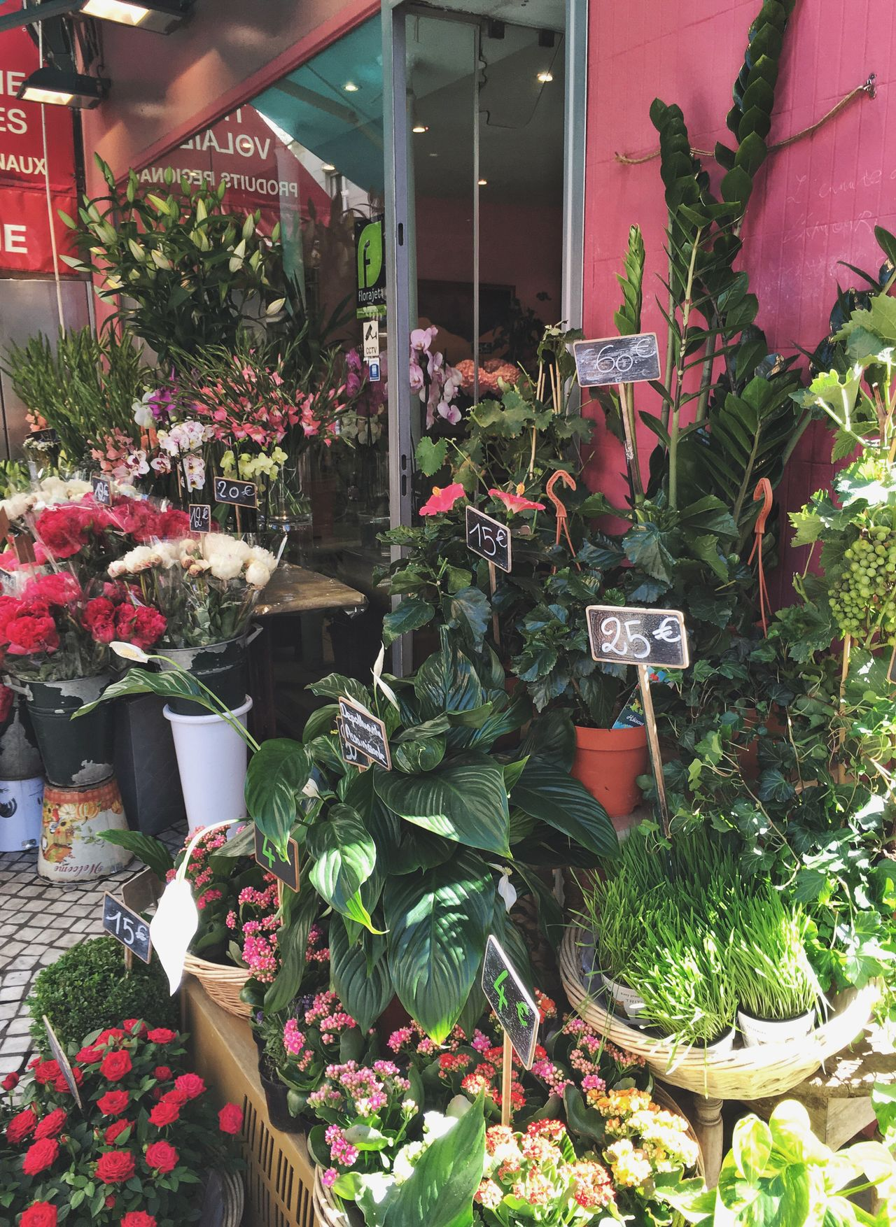 Flower Plant Potted Plant Retail  Store Nature Business Florist Growth Flower Shop Variation Small Business Freshness Beauty In Nature Business Finance And Industry For Sale Fragility No People Outdoors Day Colorful Walking Around Streetphotography Vintage Style Travel Destinations