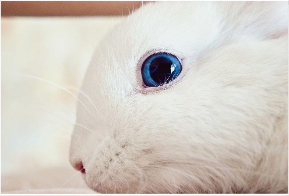 Beautiful stock photos of rabbit, Animal Body Part Animal Head, Animal Themes, Close-Up, Day