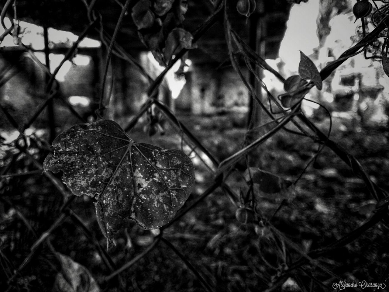 Detrás del Desastre Sky Plant Photos Guadalajara Jalisco Photographer Photography Mexico Guadalajara Photo First Eyeem Photo Photographie  Illuminated Beauty In Nature No People Close-up Day Nature Black And White Photography City Blake_and_white Blsckandwhite Blackandwhitephotography Black & White Shadow Nightphotography