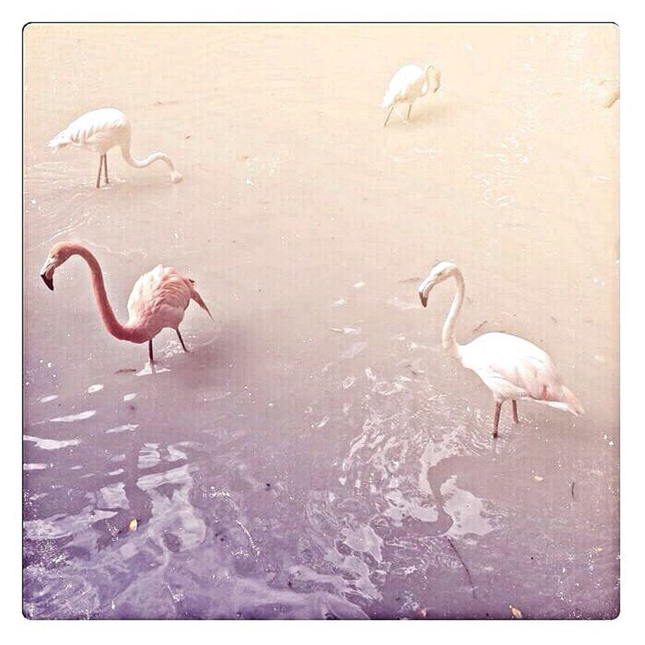 Birds киевскийзоопарк Киев Kiev