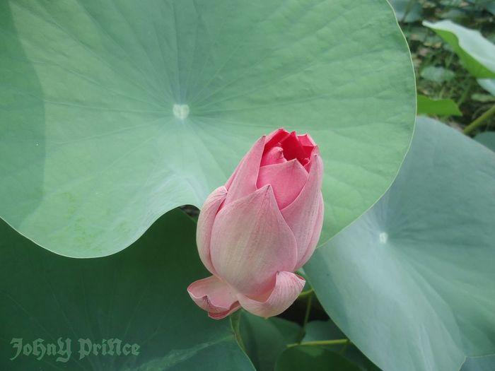 blooming bud... First Eyeem Photo