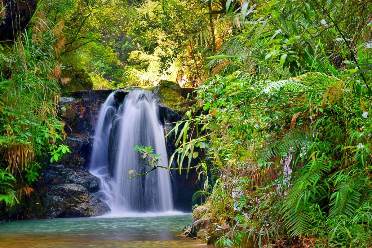 Beauty In Nature Scenics Forest Green Color Water Plant Nature Tranquil Scene Power In Nature Waterfront Stream Tree 旅行摄影 Nikon 不想上班 生活 梦幻 好好生活 这是我的城市 风光摄影 First Eyeem Photo