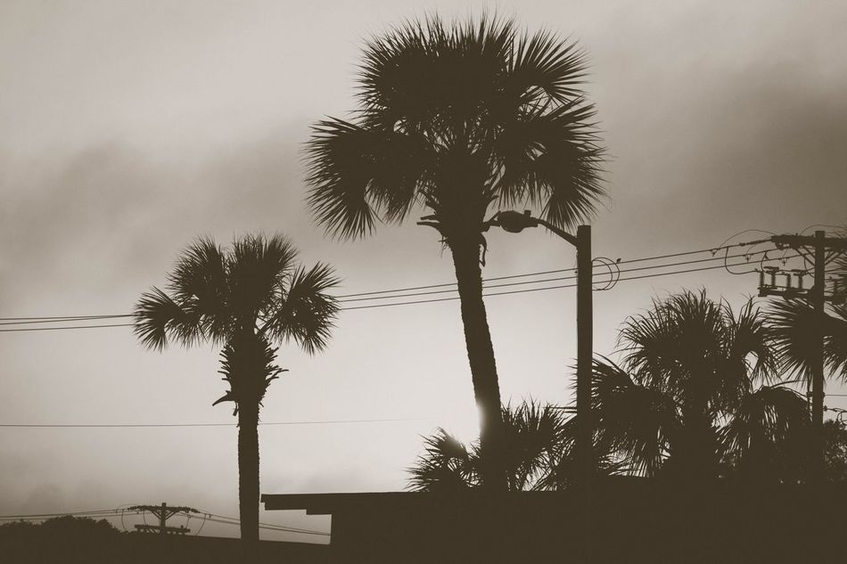 Inner city sunset Palm Tree Tree Tree Trunk Silhouette Sky Low Angle View Palm Frond Growth Nature Beauty In Nature Outdoors Urban Sunset City No People Scenics Sea Day