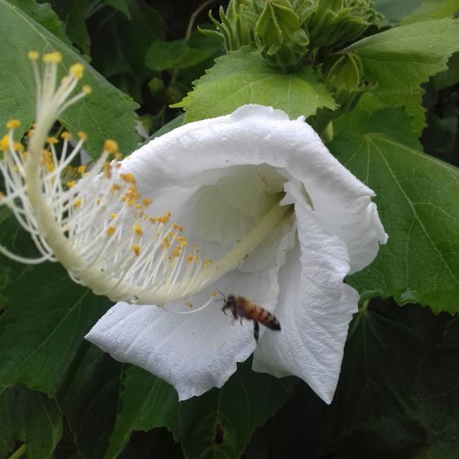 Nature Photography Nature Flower White Flower Bee Fly Flying Biutifull Photo Nature_perfection