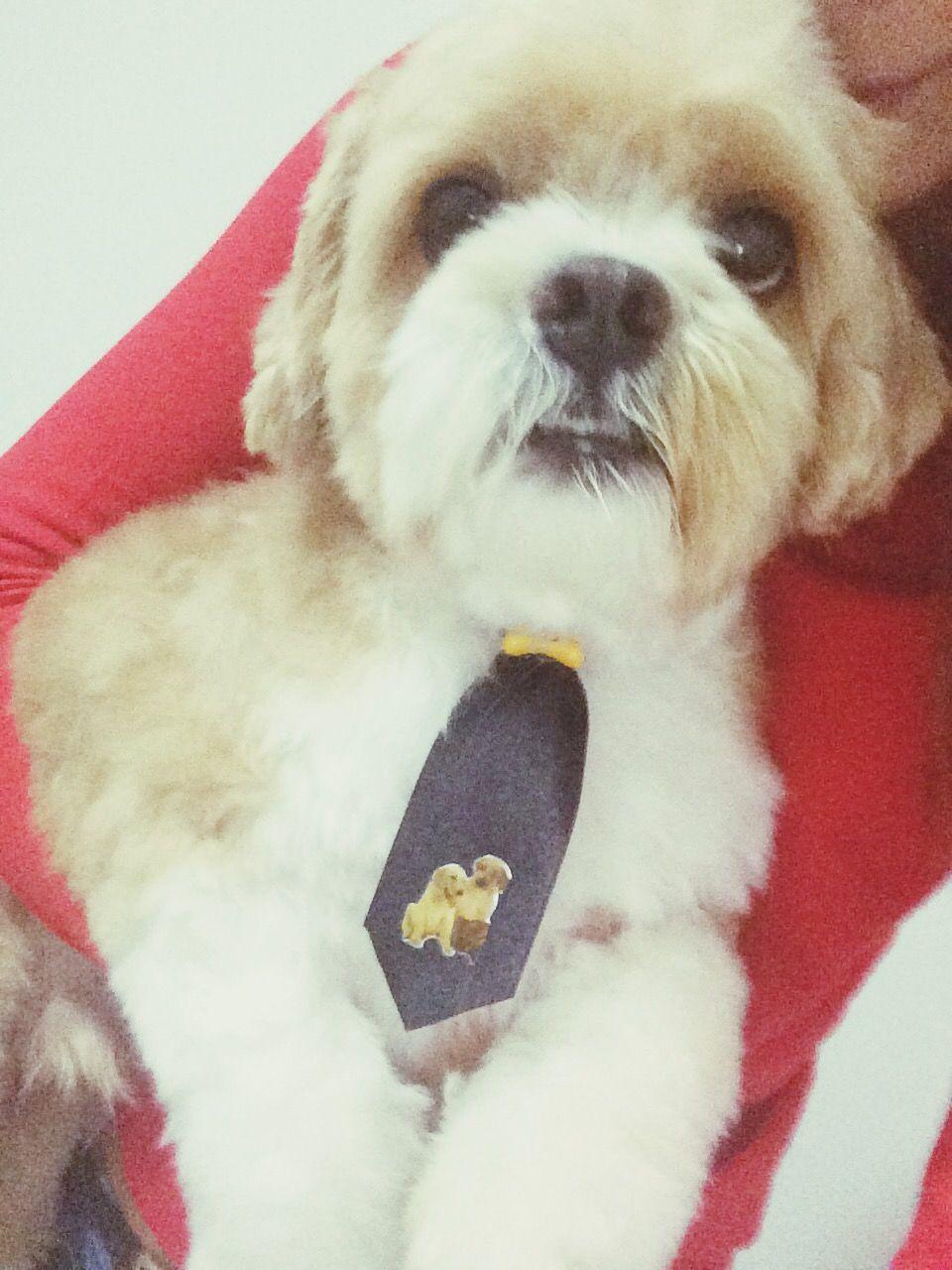 Dog Lhasa Mydog