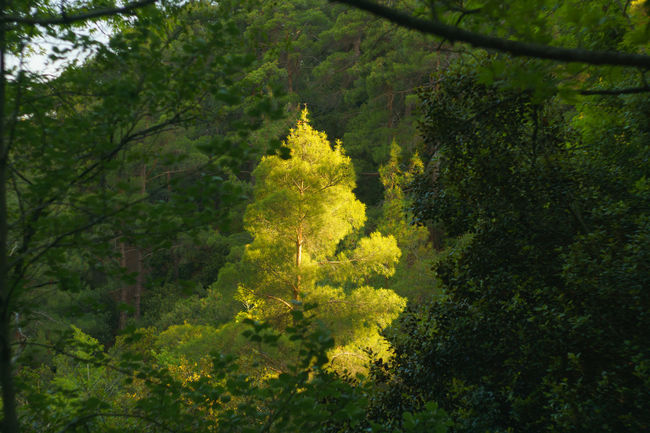 Beauty In Nature Beauty In Nature Cyprus Day Forest Freshness Green Color Growth Nature Nature Nature Photography Nature_collection Naturelovers No People Outdoors Tree Trees Yellow