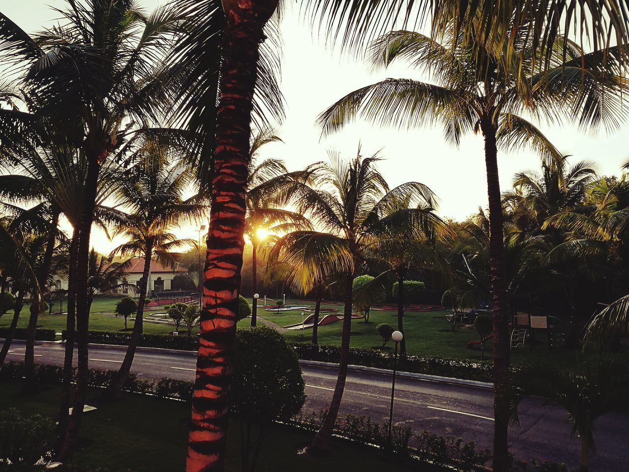 Palm Tree Beauty In Nature Sky Happiness♥ Dominican Republic Vacations Easylikesundaymorning Bestmorningever Sunrise