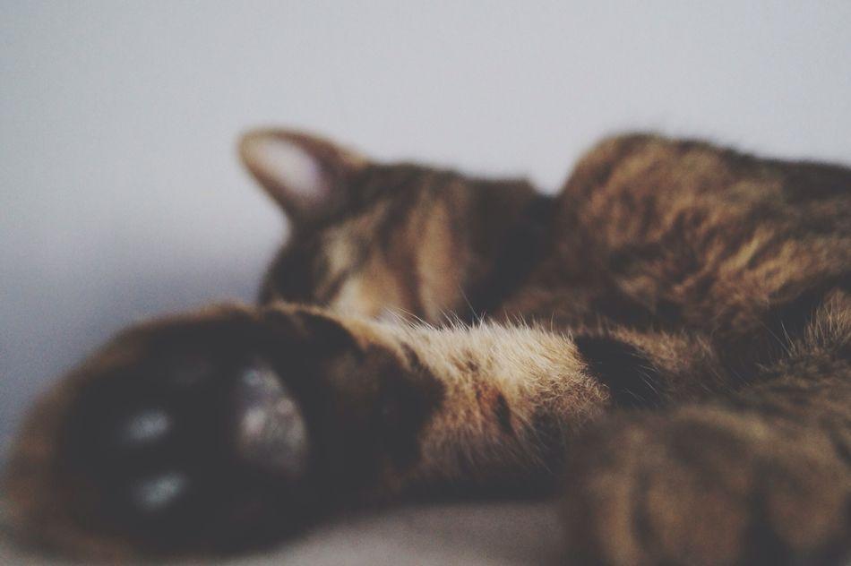 Beautiful stock photos of relax, Animal Body Part, Animal Themes, Cat, Domestic Animals