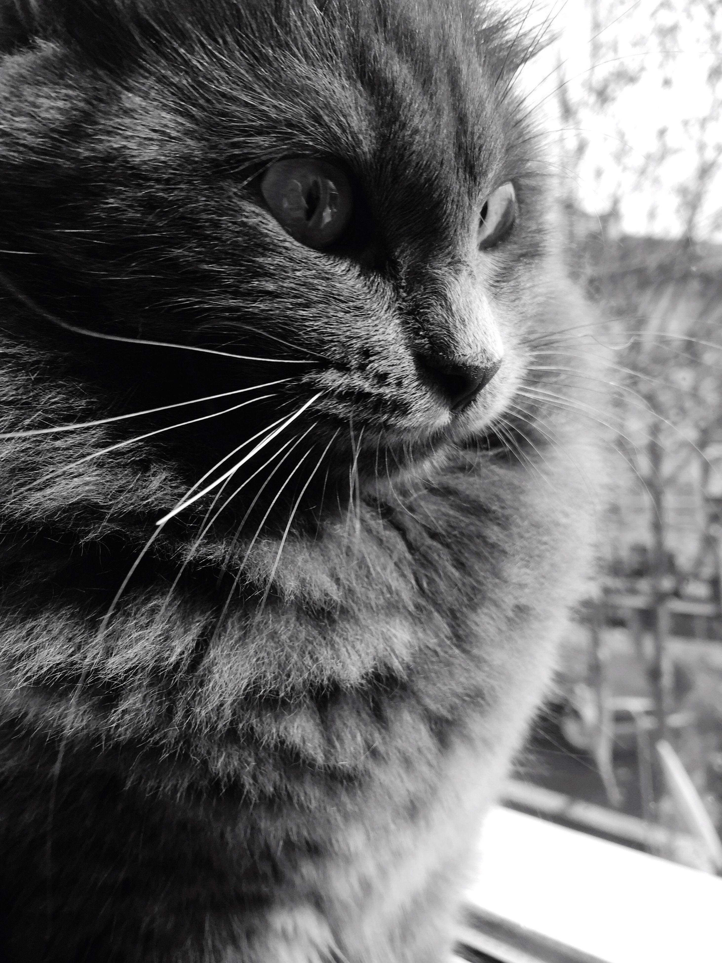 domestic cat, one animal, pets, cat, animal themes, domestic animals, feline, whisker, mammal, close-up, animal head, focus on foreground, indoors, looking away, animal eye, animal body part, staring, alertness, whiskers, selective focus