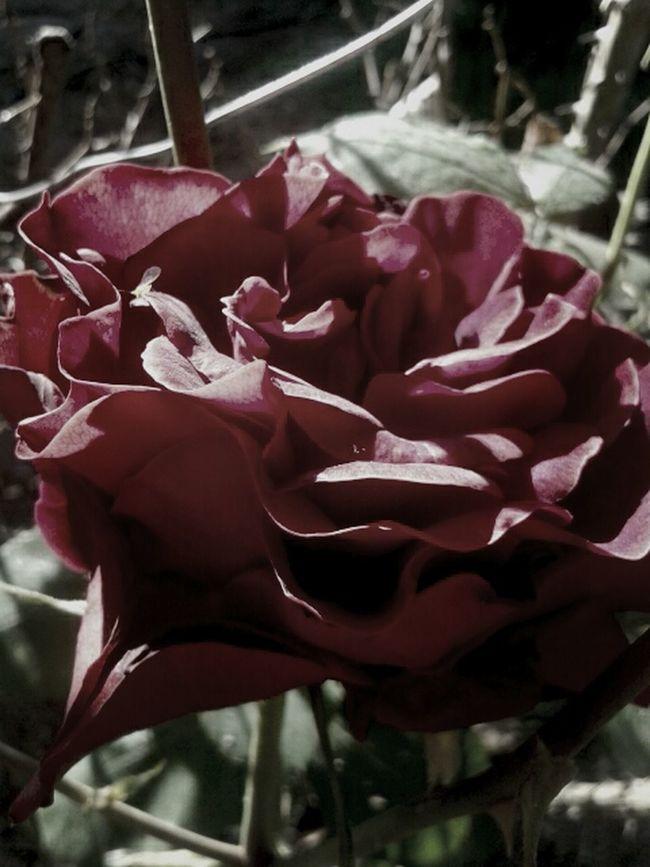 Rose GoodMorning⛅ Readytowork💪 Lovemyjob