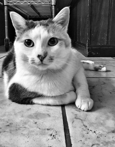 Cat Cats Of EyeEm Cats Lovers  Catsagram Cat♡ Cats Catsoneyeem Cat Watching Catstar #cat #catnap #catoftheday #catpic #catlovers #catsconnect #catinstagram #catsofinstagram #gato #gatinhos #gatto #garfield #petstagram #premierpet #photooftheday #petsofinstagram #picoftheday #petlovers #instabicho #ilovecats #ilovemypet #issovici Catslife Catstagram Catoftheday Cats_of_instagram Caturday Catsofinstagram Catlover Cat Lovers Catlovers Cats 🐱 Catsoftheworld Catslover Catsoftheday Catsofeyeem Catsofig Catsofeyem
