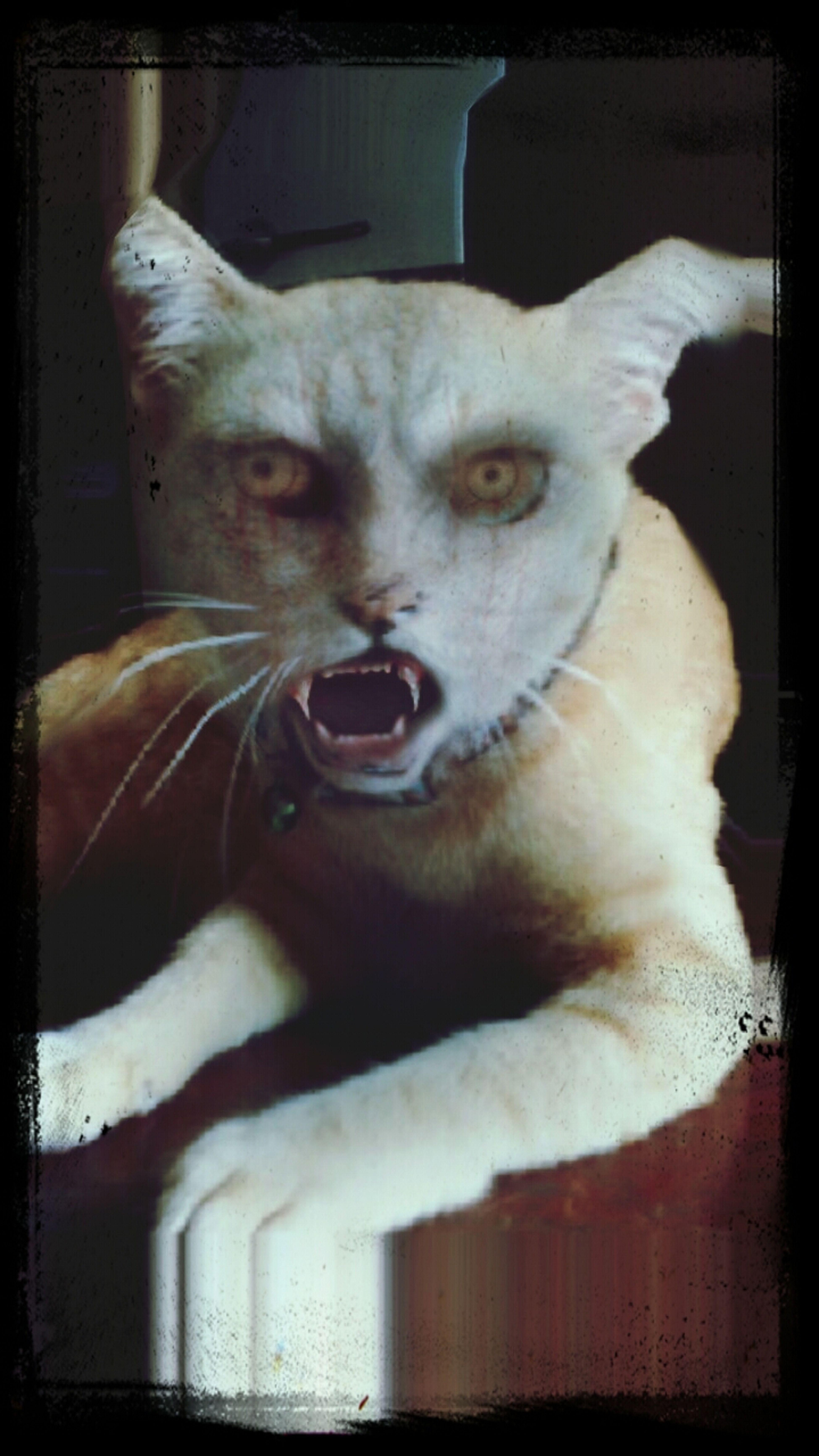 Cat Horror Monster Hi!