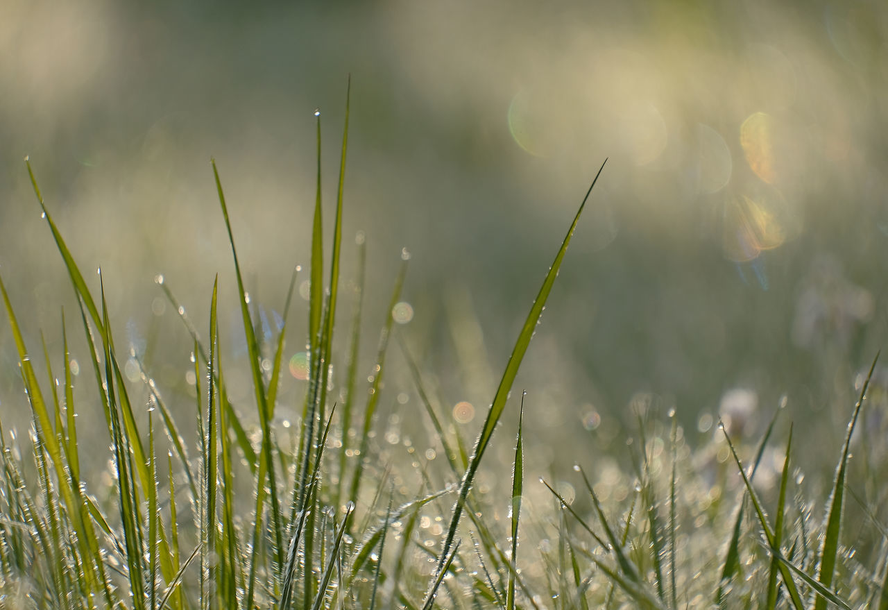 Beauty In Nature Blurred Background Close-up Copy Space Day Drop Early Morning EyeEmNewHere Field Fragility Freshness Grass Grass Blades Green Color Growth Lens Flare Nature No People Outdoors Plant Tranquility Water Water Drops On Grass Blades White Frost White Frost On Grass Blades