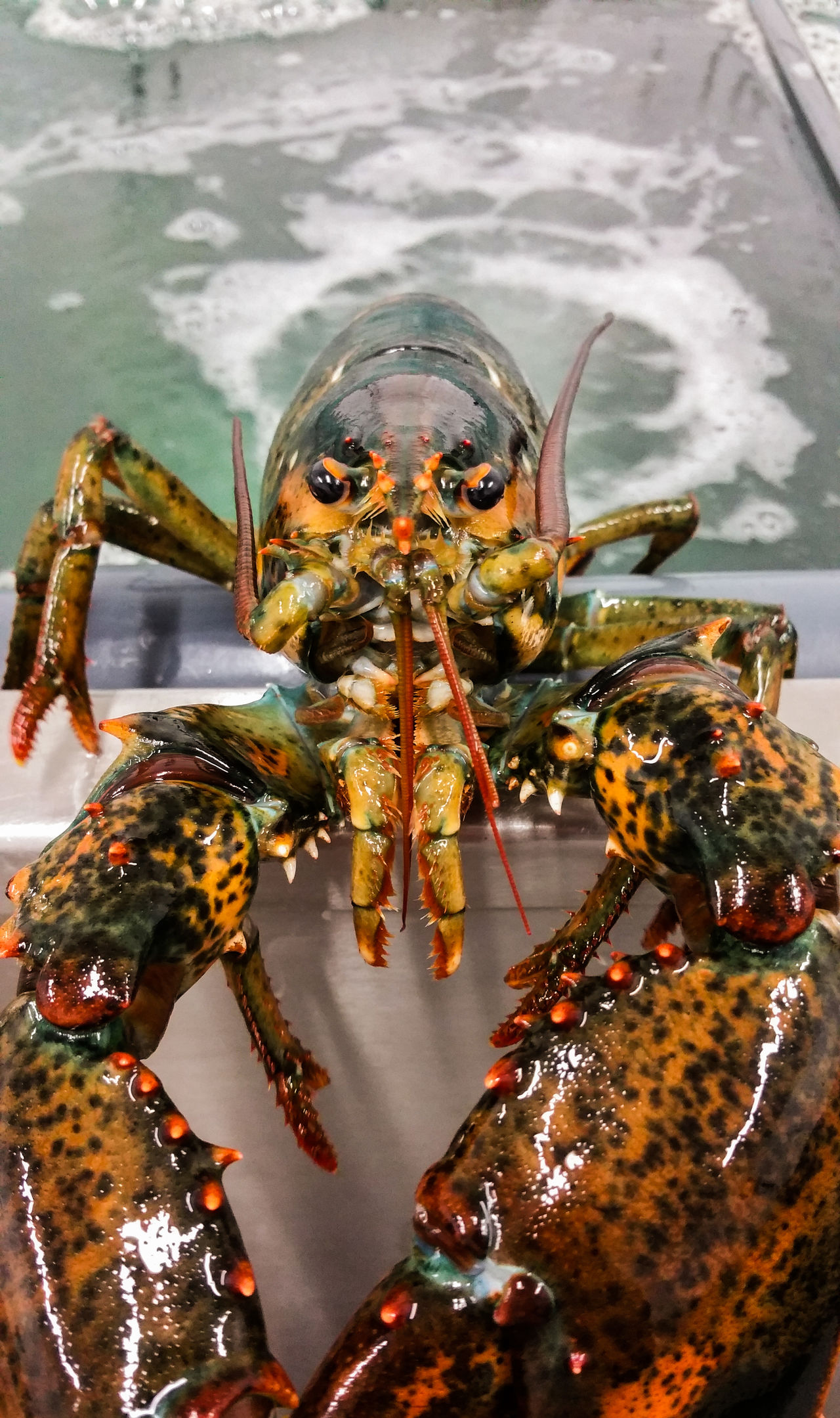 One Animal Water Close-up Animal Themes Animals The Week On EyeEem Wild Sea Life. Aquarium Beauty In Nature Lobsters Sea Portrait Sea monster Monster Animal Wildlife Nature Animals In The Wild Sea Life No People EyeEmNewHere New Talent Underwater