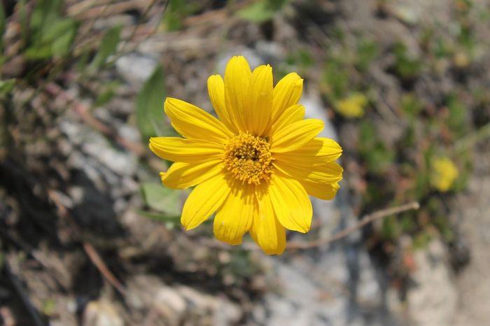 Eye4photography  EyeEmBestPics Nature Nature_collection Colors Beautiful Utah Big Cottonwood Canyon EyeEm Nature Lover EyeEm Best Shots
