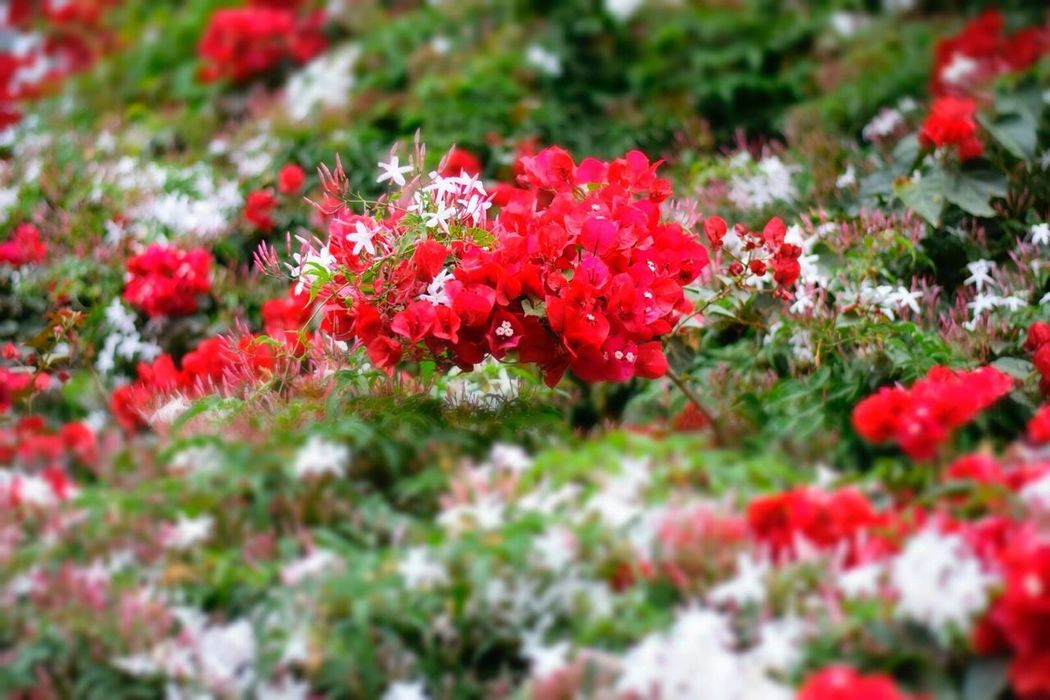 Flower Growth Red Plant Nature Beauty In Nature Fragility Selective Focus Colorful Tiltshift Brasil ♥ EyeEmNewHere The Week On EyeEm Mix Yourself A Good Time Nikonphotography Crafted Beauty