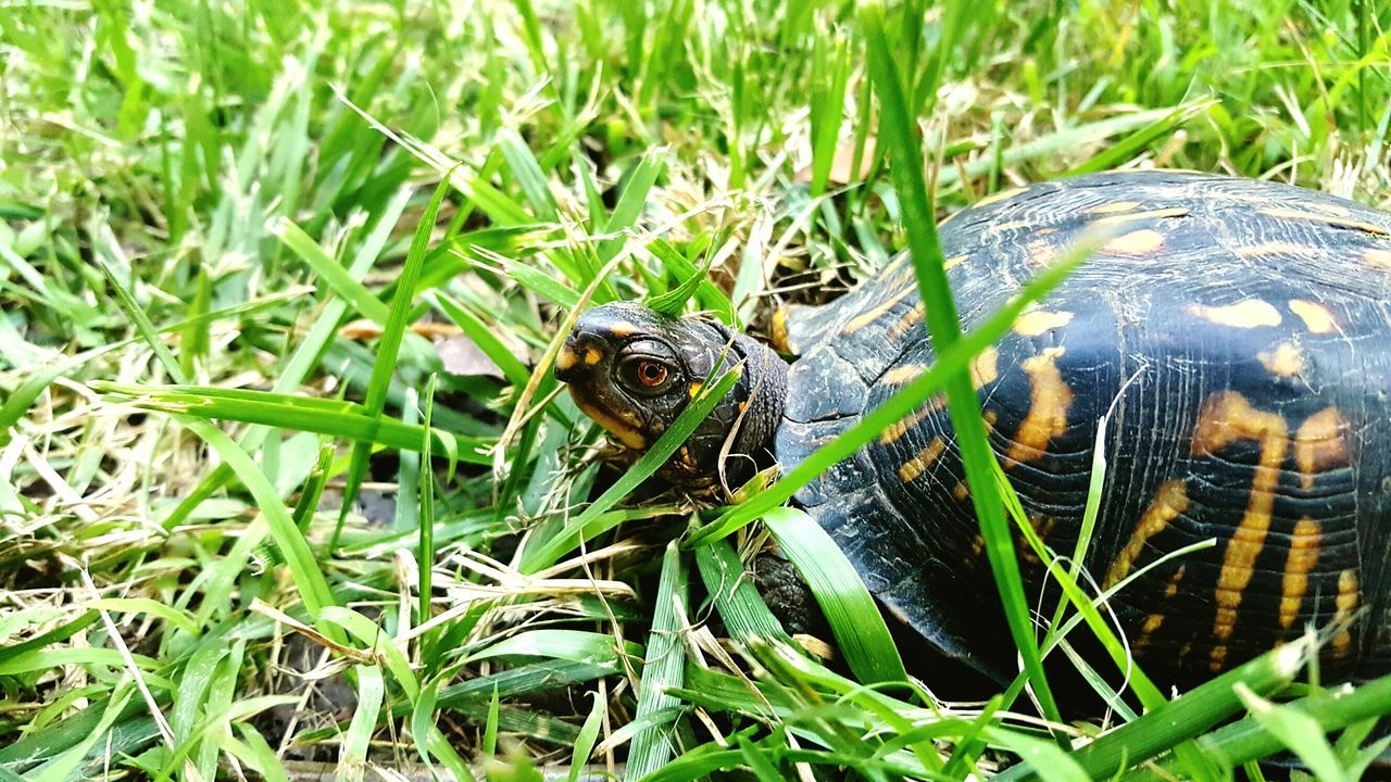 Turtle Nature Photography Up Close Nature_collection Animals In The Wild