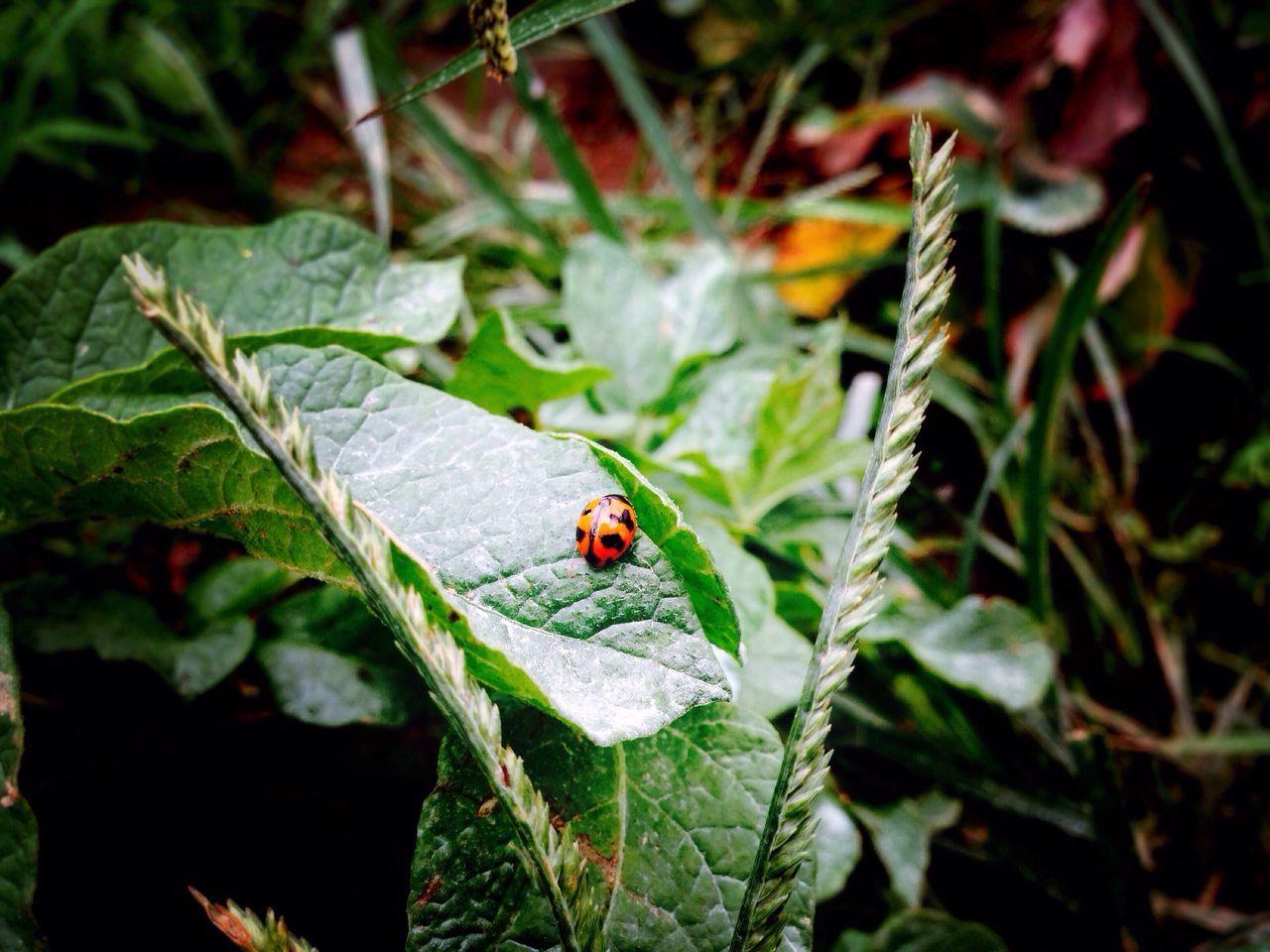 Ladybug Ladybugs Ladybug🐞 Ladybirds 🐞 Ladybird Ladybeetle