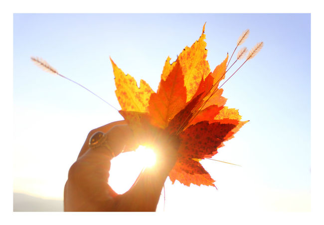 Adventure Lover Autumn Autumn Collection Autumn Colors Autumn Leafs Autumn Leaves Autumn Light Autumn🍁🍁🍁 Frame It Frame It! Happy Weekend !!! Leaf Lens Flare My View Nature Nature Nature_collection Orange Color Outdoors Sky Sun Sunbeam Sunlight Sunshine Tranquility