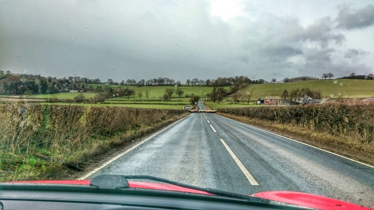 Sheep🐑 On The Road Welsh Countryside Wales❤ Danger Zone Crossing The Road