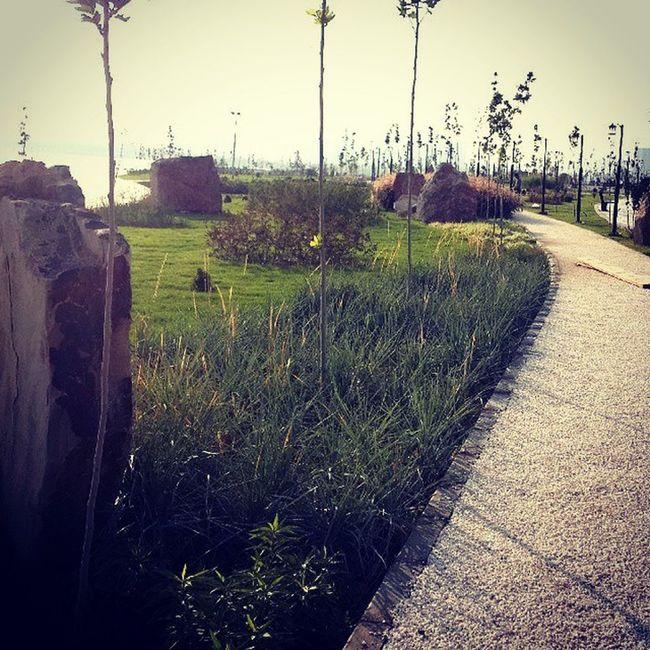 The_rock_garden Rockgarden Landscape_design Chitgarlake LandscapeArchitecture Mortezaadib Maryamyousefi Tehran Alborz