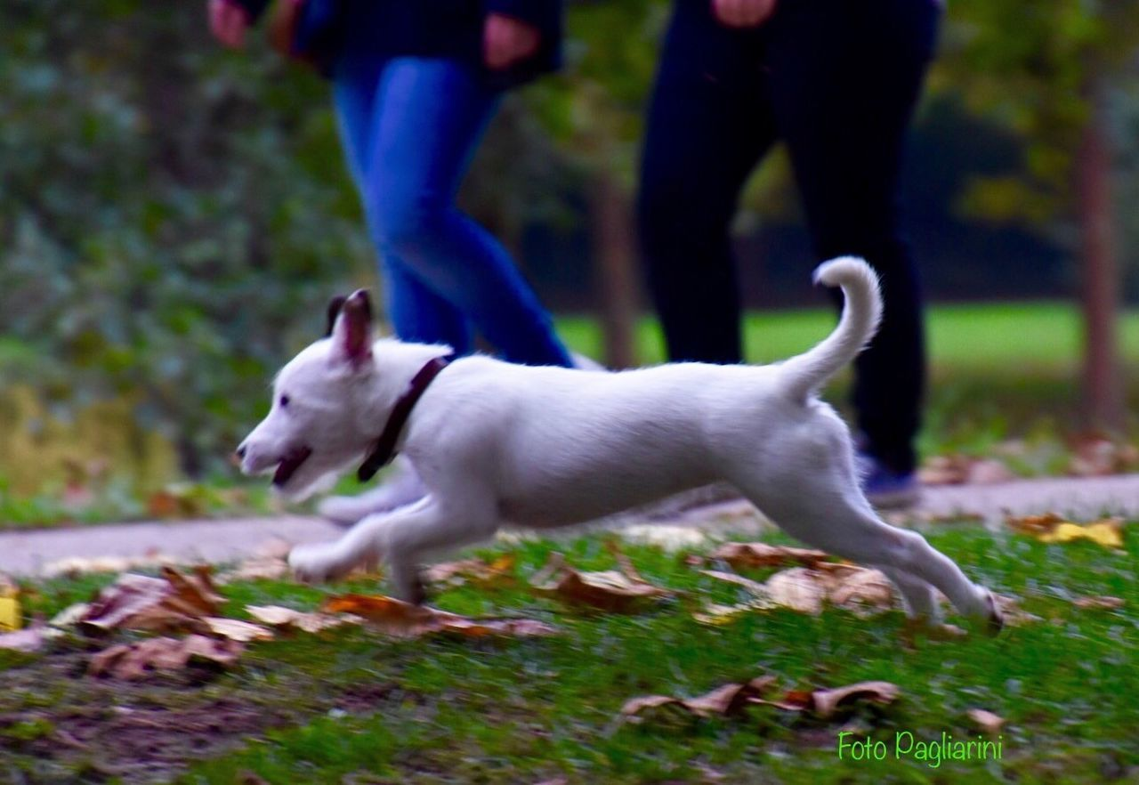 Domestic Animals Dog Focus On Foreground Nature Photography Eye Dog No People EyeEm Gallery Good Situation To Photograph 📸 EyeEm The Autumn Sky☁🍃🍂🍁 EyeEm Nature Lover EyeEm Best Shots - Nature Nikonphotography Eye4photography  Showcase: October The Autumn Is The Spring Of Winter Autumn Impressions🍁🍂🎃 Dog Love One Animal EyeEm Best Shots Beauty In Nature Nature_collection