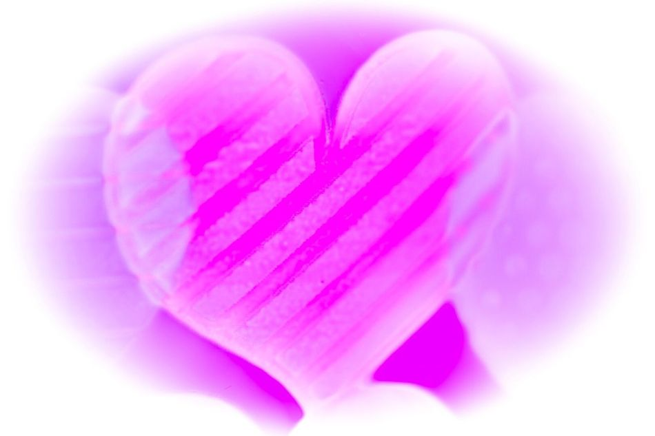 Pink Color Heart Shape Love Close-up Soft Focus No People White Background Freshness Day Fragility HeartsOnFire Heartbeat Moments
