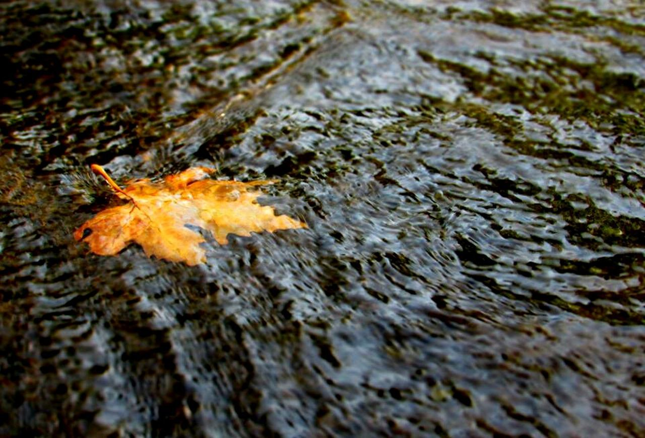 Finding beauty in the broken leaf in the water.!! Autumn Leaf Water Dry Change Reflection High Angle View Selective Focus Fallen Leaf Nature Maple Leaf Day Fallen Fragility Floating On Water Natural Condition Tranquility Outdoors Waterfront Flowing Water First Eyeem Photo JammuandKashmir Srinagar  Shalimar Bagh Chinar Tree