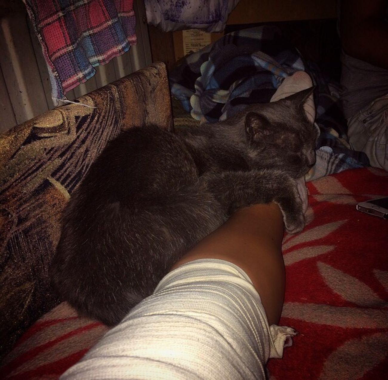 Ill Cat Doctor  RussianBlue
