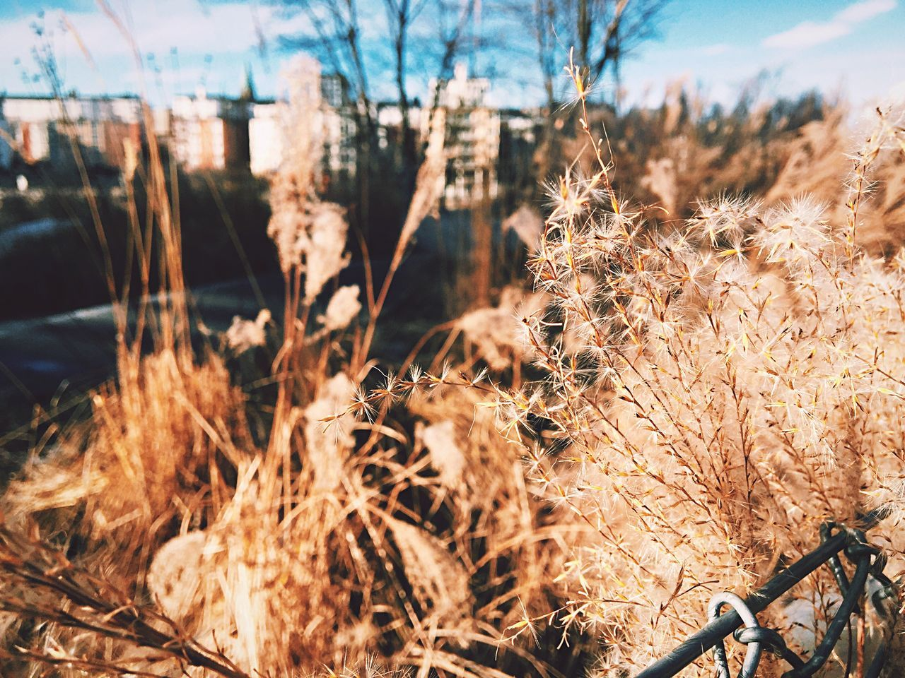 Another kind of winter. Nature Growth Field Outdoors No People Close-up Plant Day Beauty In Nature Winter Weather