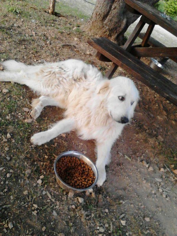 Dog Doglife Ranchdog Harriet Arkansas Arkansas_ozarks Cattle Dog Myfood