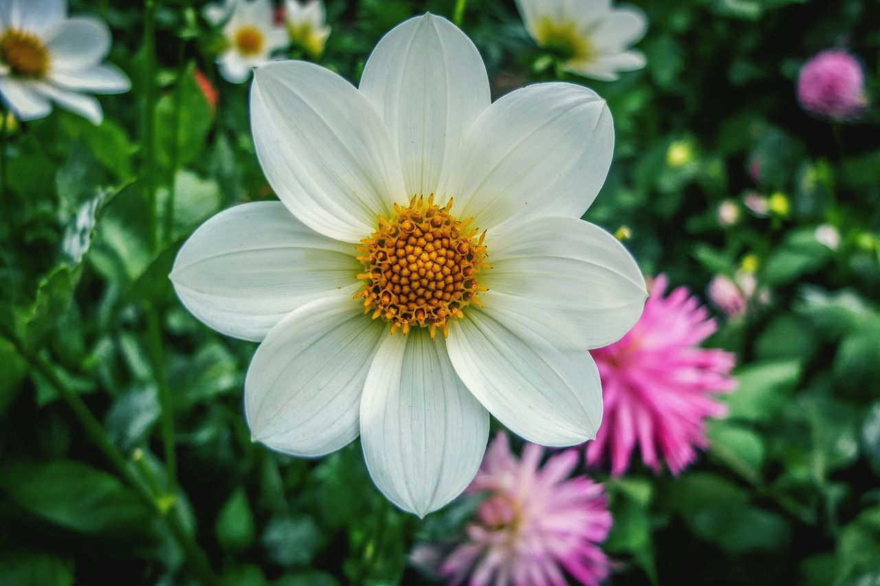 flower, petal, growth, flower head, nature, fragility, beauty in nature, blooming, freshness, plant, pollen, focus on foreground, no people, day, outdoors, close-up