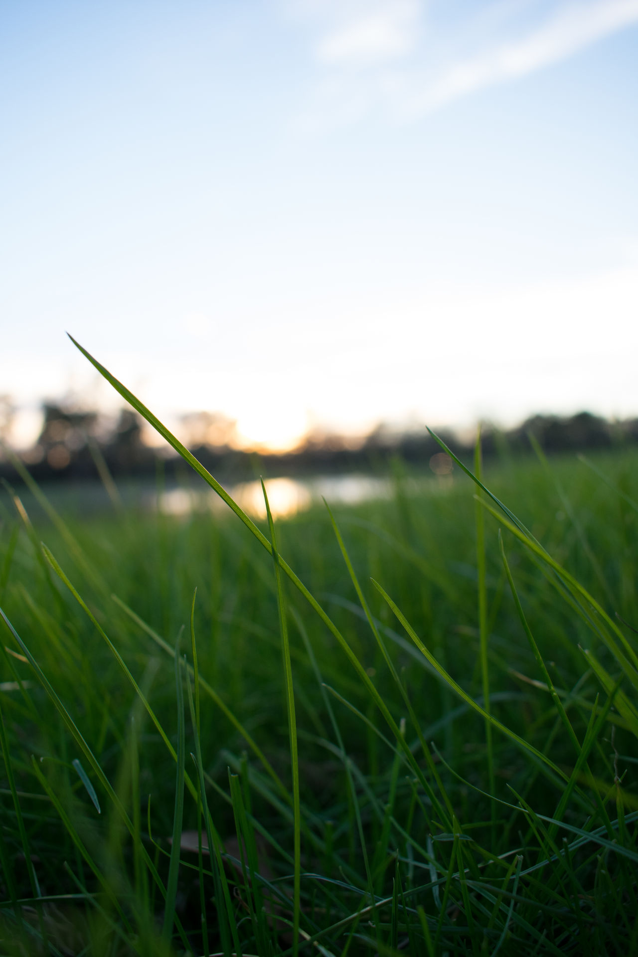 Beauty In Nature Blade Of Grass Close-up Day Field Golf Golf Course Grass Green - Golf Course Green Color Growth Landscape Nature No People Outdoors Sky Sunlight Timothy Grass