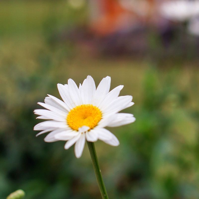 Baby Beauty In Nature Daisy Depth Of Field First Eyeem Photo Flower Flower Head Food Foodphotography Foodporn Fragility Freshness Fruits Hotel Picoftheday Pizza Plaga Pool Selective Focus Softness Sunset Swimming Pool Villa White Color Wine