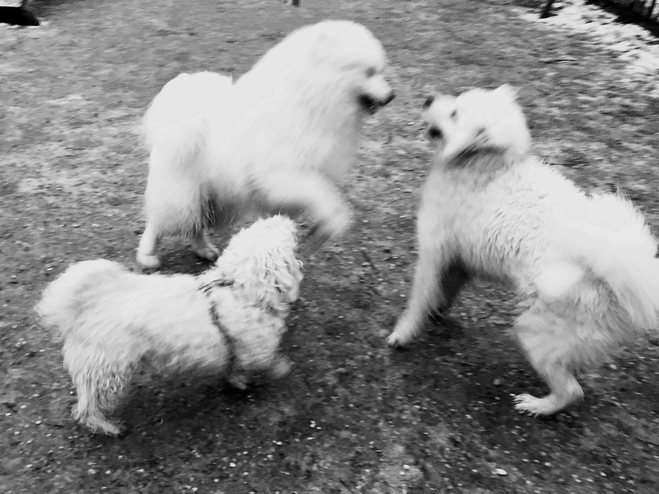 dog, animal themes, domestic animals, two animals, pets, mammal, day, young animal, togetherness, no people, playing, outdoors, nature, close-up